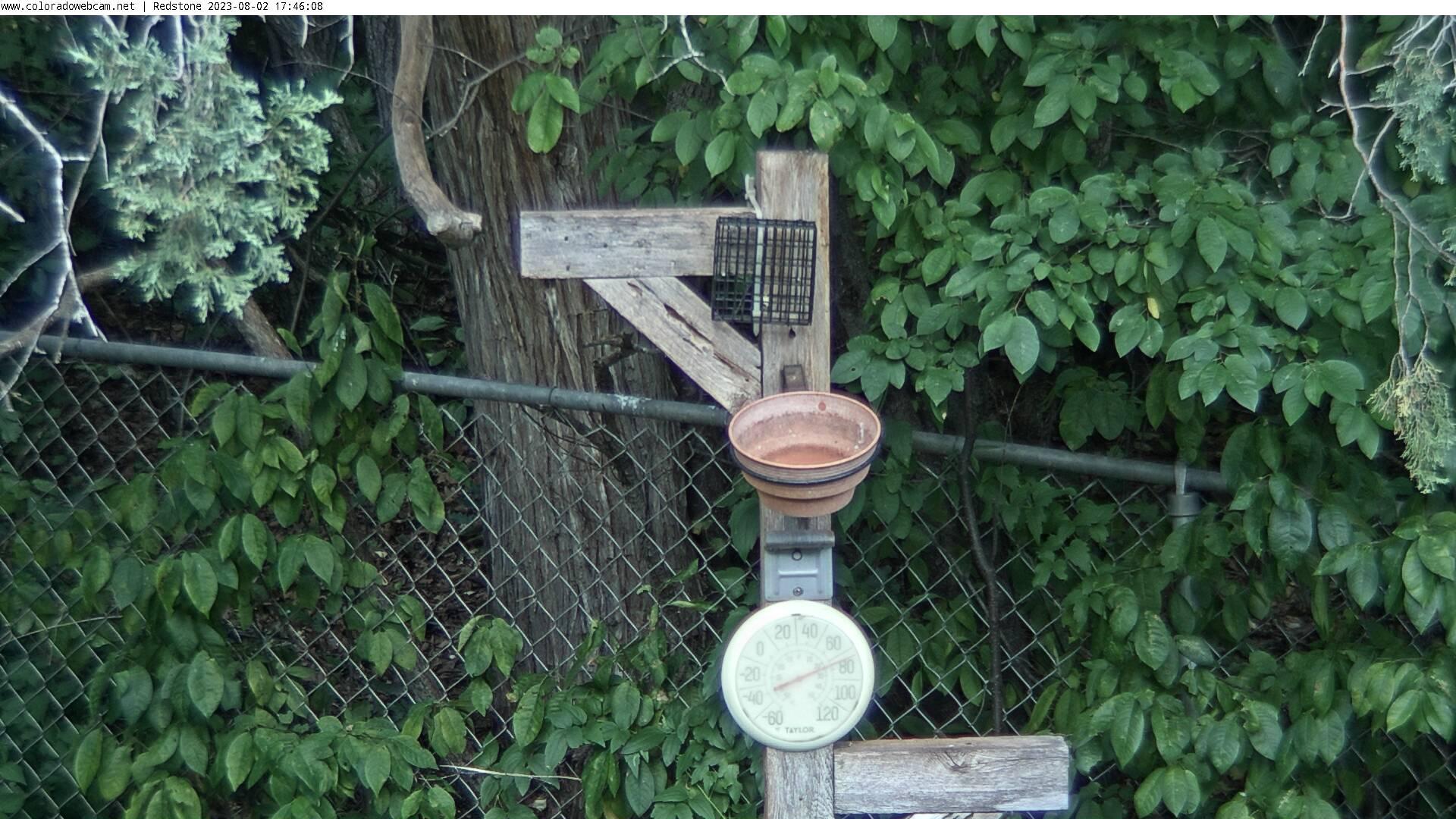 Bird Watching Redstone HWY 133 CO